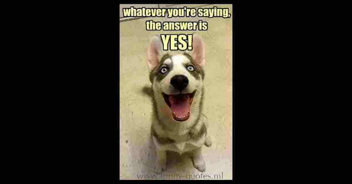 dOG LOOKING AT OWNER AND THINKING... Whatever you're saying, the answer is YES!
