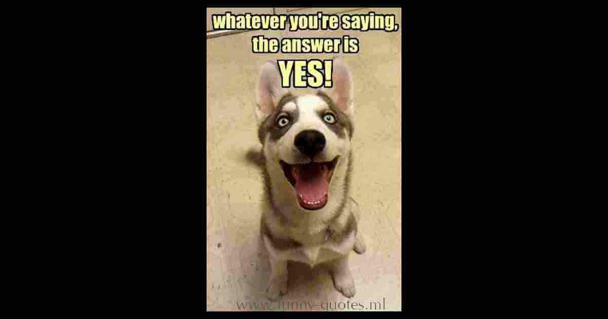 Dog looking to owner and thinking... Whatever you're saying, the answer is YES!