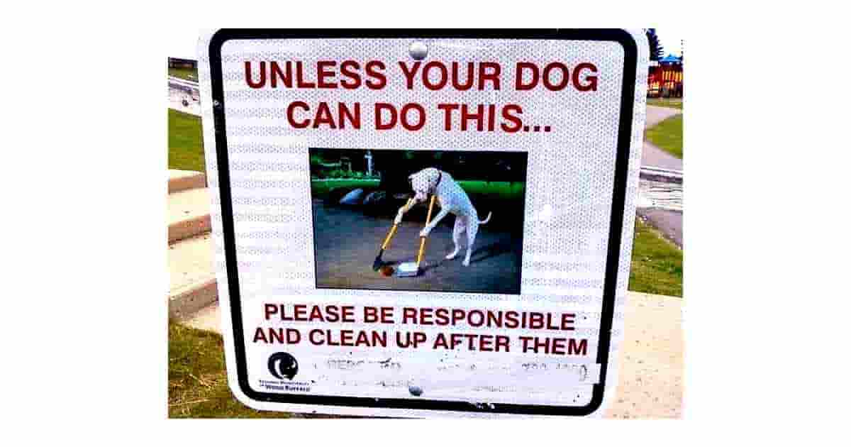 Can your dog do this?