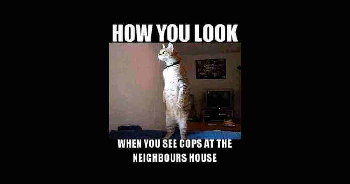 How you look when cops are at your neighbour
