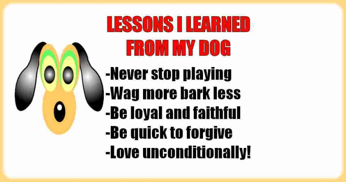 I learned from my dog